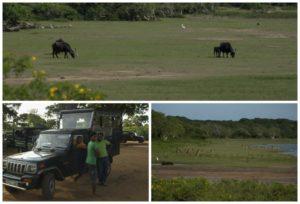 Faune et guides lors du safari à Yala