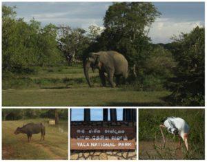 safari à Yala