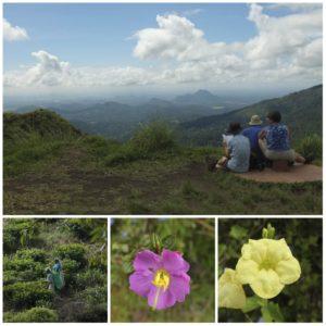 vue sur les montagnes au sommet du little adam's peak